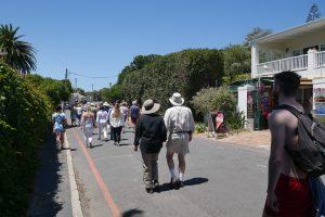 Simons Town- Pinguine