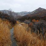 Savage Alpine Trail