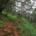 Waimea Canyon - Cliff & Canyon Trail