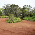 Waimea Canyon - Pihea Lookout