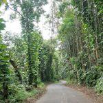 Auf dem Weg zu den Akaka Falls