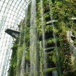 Garden by the Bay - Cloud Forest