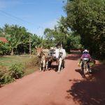 Die Tuk Tuk Fahrt zu den schwimmenden Dörfern