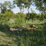 Sabi Sands Game Reserve